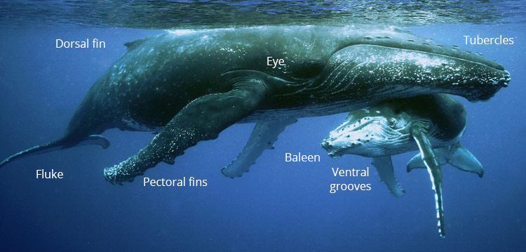 Whales biology