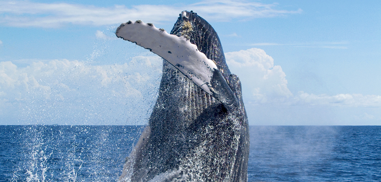 Best Maui Whale Watch Value