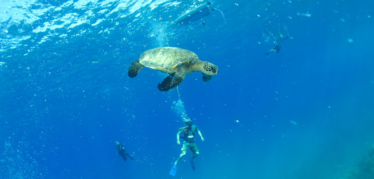 A Top Maui Fun Adventure Activity and Tour