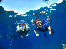 Top Maui Adventure Activity Snorkel Cruise