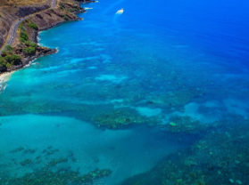 Top Maui Coral Gardens Adventure Snorkel Tour