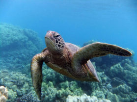 Best Snorkel Adventure Tour Location Turtle Town Maui